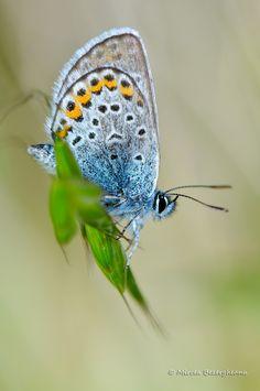 Pierduți in Delta Dunării, in tura de Rusalii. Danube River, Flora And Fauna, Romania, Moth, Butterflies, Photographers, Insects, Birds, Animals