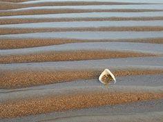 """Blog del IES Laguna de Tollón: """"Caracolas marinas"""". Semana dedicada al Día Mundia..."""