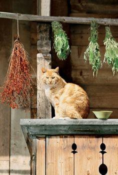 La casa è viva solo quando vivrà nelle persone e negli animali.