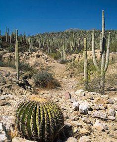 93 Best Cactus habitat images in 2017   Cacti, succulents
