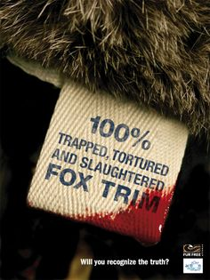 What the tag should really say. Say No To Fur! Say No To Animal Torture and Cruelty! Please, for the love of animals Peta, Cane Corso, Sphynx, Chinchilla, Wild Life, Pitbull, Animal Activist, Stop Animal Cruelty, Vegan Animals