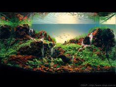 aquascapes in tropical fish aquariums