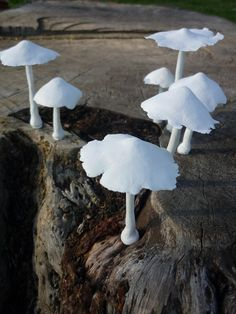 emphasis-contrast: contrast between clean white mushrooms and dirty weathered wood Ceramic Clay, Ceramic Pottery, Mushroom Art, Paperclay, Dry Clay, Clay Projects, Sculpture Art, Sculpting, Stuffed Mushrooms