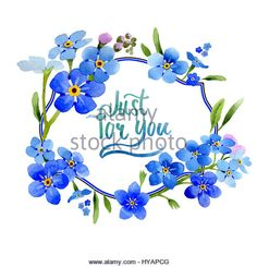 Wildflower Cutout | Blue Scribe Cut Out Stock Images & Pictures - Alamy