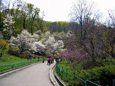 Kyiv University Botanical Garden. Click on visit.