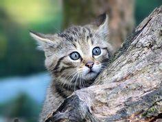 Bébé chat sylvestre 1 mois et demi | por home77_Pascale