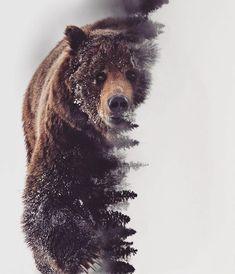 Ein Krafttier m. pics pics art pics awesome pics beautiful pics design pics for men pics ideas pics ink pics photography pics tatoo Ours Grizzly, Grizzly Bears, Grizzly Bear Tattoos, Grizzly Bear Drawing, Animal Drawings, Art Drawings, Urso Bear, Image Nice, Natur Tattoos
