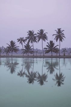 palmtreeseertmlap