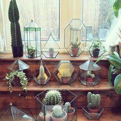 Terrarium ❤~ Cactus y Suculentas ~❤ Cactus Terrarium, Small Cactus, Cactus Flower, Air Plants, Indoor Plants, Plantas Indoor, Cactus Plante, Decoration Plante, Plants Are Friends