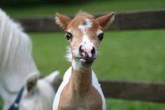 Horses are better than people. Pretty Horses, Horse Love, Horse Girl, Beautiful Horses, Beautiful Babies, Simply Beautiful, Baby Animals, Cute Animals, Baby Horses