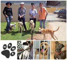 Haws looking for dog walkers Tel: 074 203 6241 / 028 3121281 Email: jschmul@vodamail.co.za
