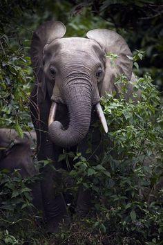 #elephant in the bush