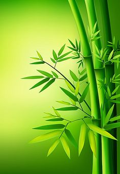 Green leaves of bamboo Bamboo Wallpaper, Love Wallpaper, Colorful Wallpaper, Galaxy Wallpaper, Beautiful Landscape Wallpaper, Beautiful Flowers Wallpapers, Beautiful Images, Rose Flower Wallpaper, Flower Backgrounds