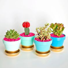 5 ideias para customizar vasos de plantas.