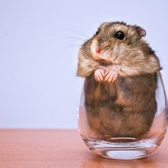 Put rodent in glass...mix well