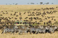 Witness the Great Migration in Tanzania's Serengeti National Park. #travel #bucketlist