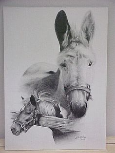 Pencil drawing Of Sundae and Melody- Stearns Homestead; Pencil Art, Pencil Drawings, Parma, Homestead, Ohio, Coloring Pages, Moose Art, Animation, Horses