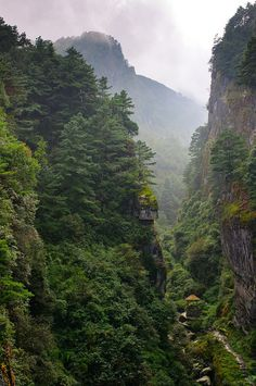 Forest views in China