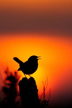 Sunset Silhouette, Silhouette Painting, Bird Silhouette, Alone Photography, Sunset Photography, Landscape Photography, Pictures To Paint, Nature Pictures, Silhouette Photography
