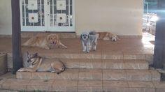 Meus filhos caninos! Lucky, Lara, Chico e Sol.
