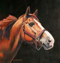 Horse in Colored Pencil. Original Artwork.