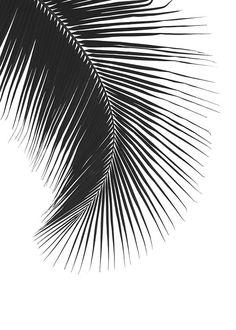 Poster mit einem Schwarz-Weiß-Foto für die Inneneinrichtung   Stilvolles Poster mit Palmenblatt