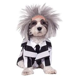 Beetlejuice is ready to haunt your home and yard in our Beetlejuice Dog Costume. This Beetlejuice Dog Costume includes a striped jacket and dog wig. Pet Halloween Costumes, Pet Costumes, Dog Halloween, Halloween Fancy Dress, Halloween Outfits, Costume Ideas, Spirit Halloween, Halloween Rocks, Halloween Ideas