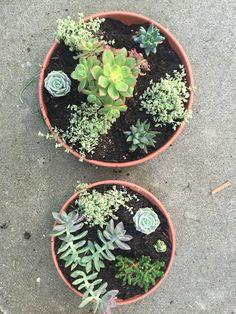 DIY succulent garden!