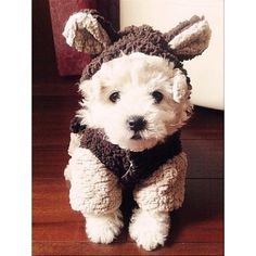 Bundle up today, like this little cutie! Tag us with #puppiesforall for a chance to be featured! @DogVacay #dog #love #instadaily #cute #puppy #instagood #puppies #dogs #instadaily #cats #dogs #cat