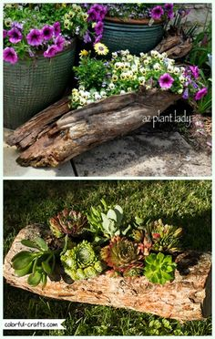 Wood Logs and Stumps DIY Ideas Projects & Furniture Instructions DIY Hollowed Wood Log Planter Instr Tree Stump Planter, Log Planter, Succulent Planter Diy, Flower Planters, Garden Planters, Garden Ideas With Logs, Garden Yard Ideas, Diy Garden Projects, Log Projects