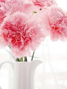 pink carnations XOXO.