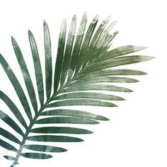Palm Leaf Art Print in Detail