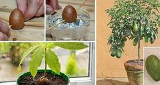 L'avocado è un alimento delizioso e irresistibile, versatile tanto da poter essere aggiunto ad una [Leggi Tutto...]