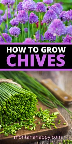 How to Grow Chives will teach you all about this amazing herb. Chives is the perfect plant for your garden. for beginners How to Grow Chives * Herb Gardening Best Herbs To Grow, Growing Herbs, Growing Vegetables, How To Grow Chives, Planting Vegetables, Veg Garden, Easy Garden, Garden Ideas, Vegetable Gardening