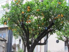 #laranxeira #terraza #odelito