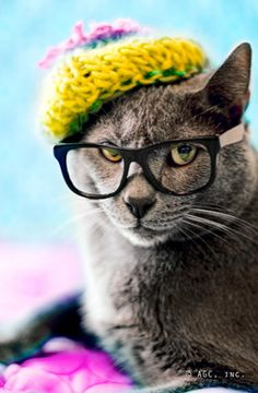 © american greetings/ cat wearing glasses/greeting card from Target pet endcap fall 2012 to raise money for ASPCA/ audreytyler.me