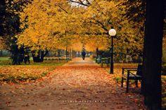 """fot. Sylwia Klaczyńska: """"Codziennie mijam ten park idąc na uczelnie i za każdym razem dostrzegam w nim coś innego niż zwykle."""" https://www.facebook.com/photo.php?fbid=10151982555642893&set=a.392564567892.167471.376101312892&type=1&stream_ref=10"""
