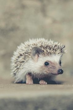 Oh so sweet little hedgehog!