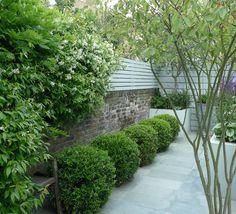 A row of topiary Ilex crenata balls creates a dramatic focal point