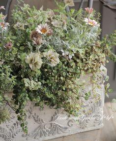 ガーデニング園芸の花苗通販サイト。豊富な種類の花苗・葉もの・リーフ・最新品種・土・鉢やテラコッタなどの販売。おしゃれな寄せ植えの植え方。Junk sweet Garden tef*tef*