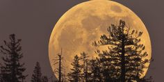 A Supermoon Like This One Won't Come Again Until 2034   Huffington Post
