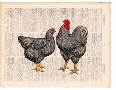 Black speckled country French chickens COUPON SALE by bmarinacci