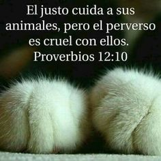 Cat Love Quotes, Gods Love Quotes, Dog Quotes, Funny Quotes, Christian World, Christian Quotes, Gods Plan, God Is Good, Love Words