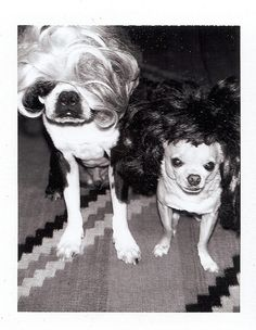 #dogs in wigs always make me happy  Like,Repin,Share, Thanks!