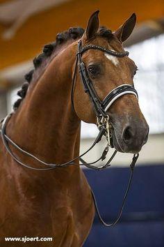 Alexandro P, stunning stallion!
