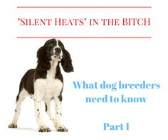 The truth about silent heats : 20 facts dog breeders need to know ( Part I )
