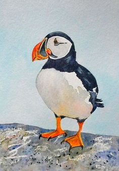 Beautiful watercolour of a puffin. Will fit a 12 x 16 inch frame when mounted
