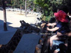 Une journée au zoo de la Palmyre [vlog]