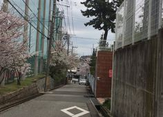 Sakura Japanese Streets, Scenery, Houses, China, Travel, Homes, Viajes, Landscape, Destinations