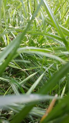Grass Grass, Herbs, Plants, Grasses, Herb, Plant, Spice, Planting, Planets